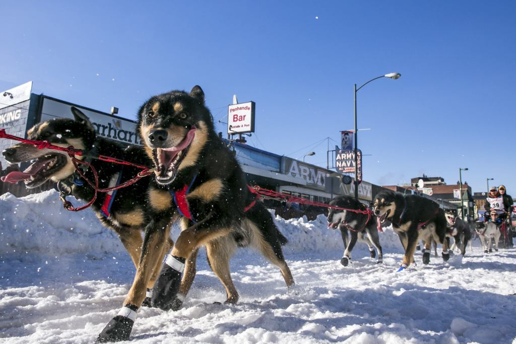 Musher Jason Mackey leaves the start chute during the ceremonial start to the Iditarod dog sled race in downtown Anchorage