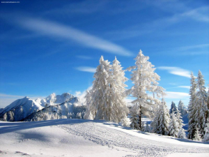 beautiful-winter-snow-800x600